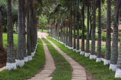Road. Beautiful road with trees and fences royalty free stock images