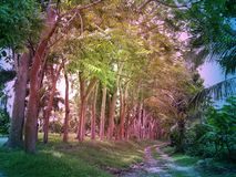 Road in a beautiful tropical forest Stock Images