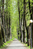 Road in a beautiful tropical forest Stock Photos