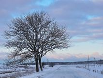 Road and beautiful winter trees, Lithuania Stock Photo