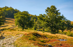 Road through beech forest on a hillside. Country road through beech forest on a hillside. beautiful mountain scenery in autumn evening light Stock Image