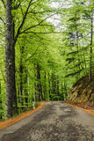 Road in the beech forest. A road that runs for several kilometers in a beech forest in the mountains of Tuscany (Italy Royalty Free Stock Photography