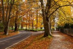 Road bending under orange autumn trees. Road bending under orange autumn trees in Australia stock images