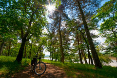 Road bicycle on the rural road in the forest Royalty Free Stock Image