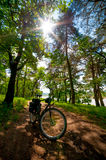 Road bicycle on the rural road in the forest Stock Photos