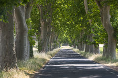Road with big trees in France. Road with big trees in Herault, Languedoc-Roussillon, France, at spring (june royalty free stock images