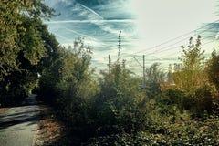 Road bike Mannheim Meadow river neckar outdoor sport morning sun industry stock image