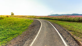 Road for bikes and cycling outdoors in beautiful park. Royalty Free Stock Photography