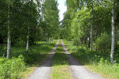 Road in a birch forest Royalty Free Stock Photos