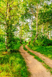 Road in birch forest Royalty Free Stock Image