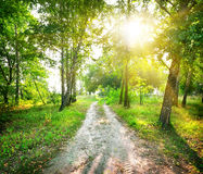 Road in a birch forest. The road in a magic birch forest in sunny day stock photos