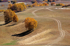 Road and birch trees in upland field Royalty Free Stock Photography