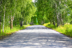 Road in birchwood in summer Royalty Free Stock Photography