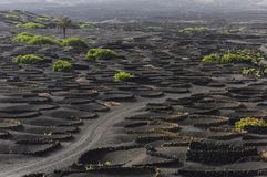 Road through the black vineyards in La Geria. Growing vine in lava, black is beautiful, background, Lanzarote, Spain Royalty Free Stock Photography