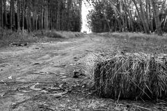 A road in black and white. A black and white road in the camping royalty free stock photo