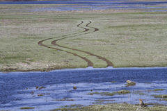 The road blurred spring floods. Spring flooding in the fields of Ukraine Stock Photography