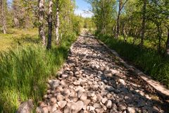 Stone road through the swamp. Road through a bog laid out on Anzersky Island, Arkhangelsk Region, Russia royalty free stock photography