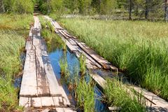 Wooden road. A road through a bog planked on Anzersky Island, Arkhangelsk Region, Russia royalty free stock image