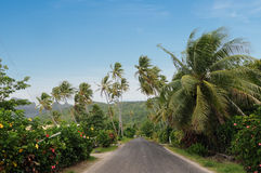 Road in Bora-Bora Stock Image