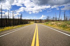 Road through burnt forest Stock Image
