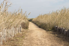 Road between Canes. Riserva Naturale Torre Guaceto Royalty Free Stock Images
