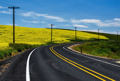 Road and Canola flowers Stock Image