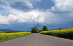 Road, canola yellow fields, stormy sky Royalty Free Stock Image