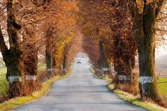 Road with car and beautiful old alley of lime tree. Autumnal view of road with car and beautiful old alley of lime tree Royalty Free Stock Image