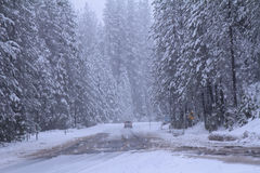 Road with car in winter forest Stock Image