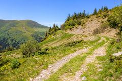 The road in the Carpathians Royalty Free Stock Image