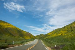 Super Bloom Road royalty free stock images