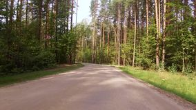Road for cars lies between the tall trees mixed forest. Road for cars lies between the tall green trees mixed forest from above a cloudless sky stock video