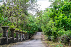 Road cement with trees , Phuket Stock Image