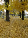 Road at Cemetery during Autum Stock Image
