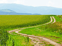 Road in the cereal field Royalty Free Stock Images
