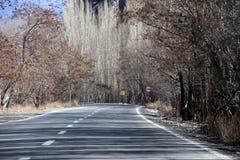 Road, Chaloos road, shadow, trees Stock Photo
