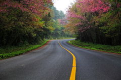 A road with cherry blossom. The road curves with cherry blossom, Line yellow Stock Photo