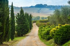Road in Chianti region in province of Siena. Tuscany. Italy. Road in Chianti region in province of Siena. Tuscany landscape. Italy royalty free stock images