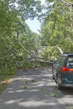Road Closed Due to Fallen Tree Stock Image