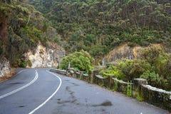 Road Through Coastal Forrest Stock Image
