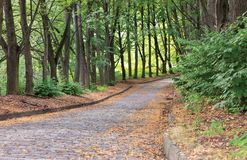 The cobbled paving stone road goes into the distance in the summer old park of the city royalty free stock image