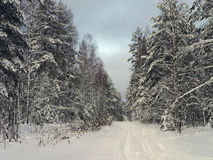 The road in cold snowy winter forest Stock Image