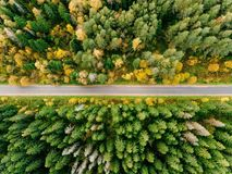 Road in the autumn forest aerial view. Road in the colored autumn forest aerial view royalty free stock photo