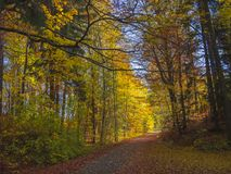Road in colorful autumn deciduous beech tree and spruce tree for Stock Image