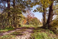 Road and Colorful autumn leaves on trees Stock Photo