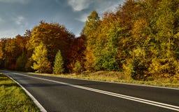 Road among colorful autumn trees. Asphalt road among colorful autumn trees Royalty Free Stock Images