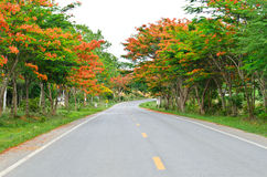Road among colorful trees on the way Royalty Free Stock Photos