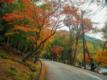 Road with colorful yellow, green , orange and red maple autumn trees royalty free stock photo