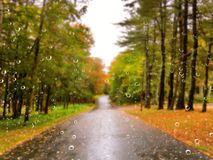 Road in the autumn on a rainy day