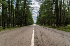 Old road in the forest royalty free stock photo